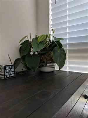 DAKSHINA I. verified customer review of Philodendron Kokedama