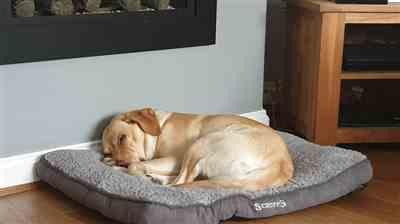 petslovescruffs Cosy Dog Mattress - Grey Review