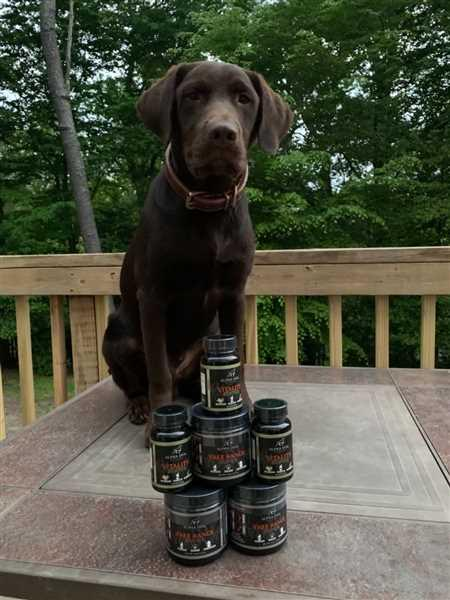 Alpha Dog Nutrition Joint Lubrication Bundle Review