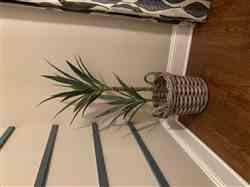Anonymous verified customer review of Tropical Fake Plants Yucca Tree in Pot - 44 Tall