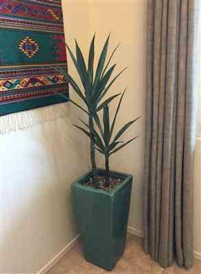 Suzette Russell verified customer review of Tropical Fake Plants Yucca Tree in Pot - 44 Tall