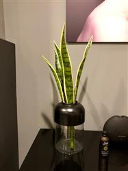 Shykae S. verified customer review of Artificial Snake Plant - 24 Tall