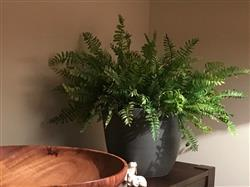 Afloral.com Artificial Fern Bush in Green - 14 Tall Review
