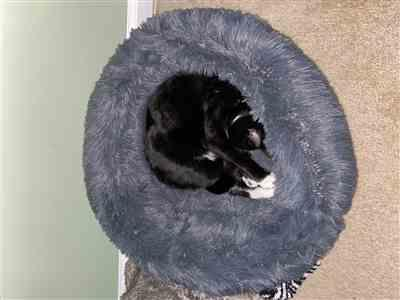 Julie verified customer review of Calming Pet Bed