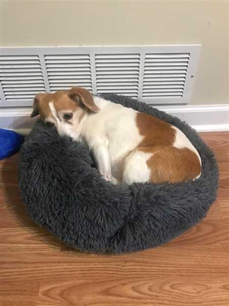 Kelly Glover verified customer review of Calming Pet Bed