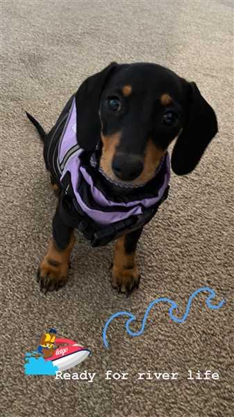 Steph Stavrinou verified customer review of Water Woofer DFD Dog Life Jacket Lilac