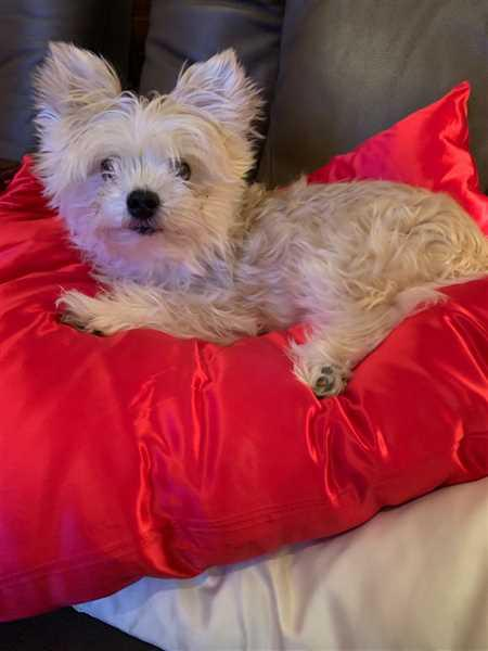 Blissy Pillowcase - Red - Standard Review